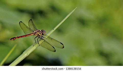 Macro Photography of Insect and Reptile