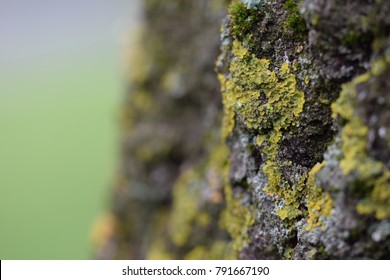 Macro photography of moss and lichen