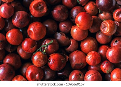 Macro photography of pink peppercorns in dark tones top view