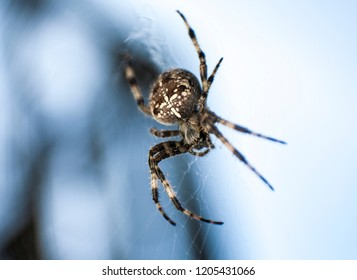 macro photography spider