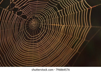Macro Photography of a Spider Web Background Texture with Blurred Colors.