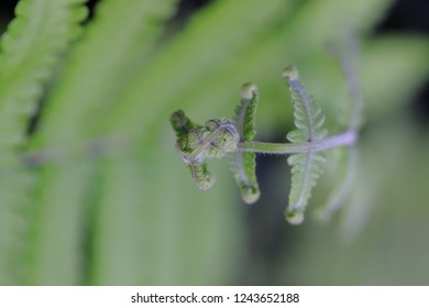 macro photography of a sprout unrolling