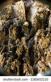 macro photography of a tree bark texture on a sunny day