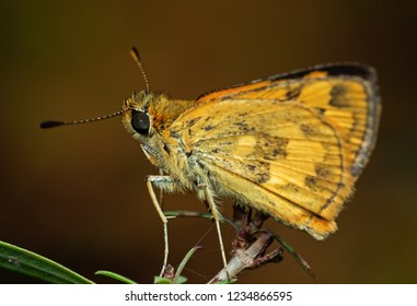 Macro Photography of Yellow Moth on Twig of Plant