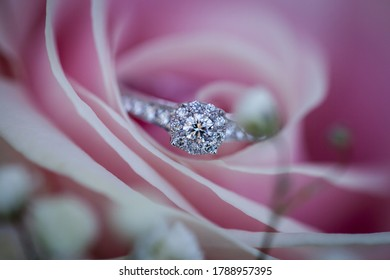 Macro picture of beautiful new shiny white gold engagement ring with diamonds, placed on the beautiful pink rose petals, blurred background