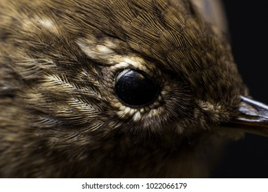Macro picture of a bird