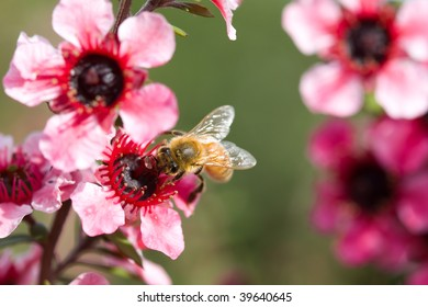 A macro picture of bumble bee on a red flower