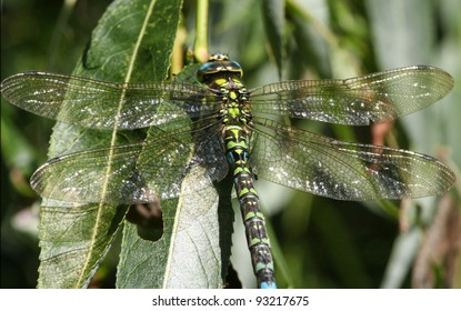 Macro picture of huge dragon-fly in high detail.
