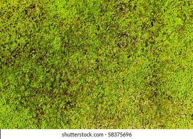 macro picture  of tropical moss background