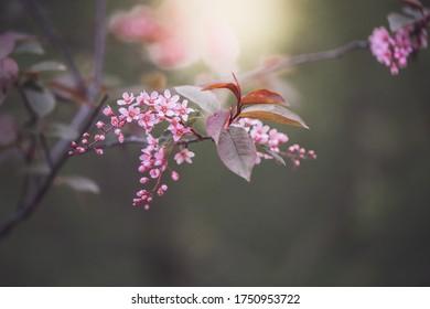 macro pink flowers. High quality photo