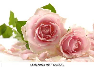 Macro of pink rose with petal
