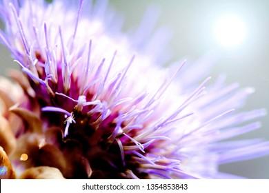 Macro pollen flowers purple tone on the farm