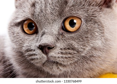 Macro portrait of a gray cat with red eyes