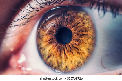 Macro pupil retina human colse eye photo