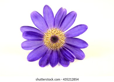 Macro of purple flower on a white background