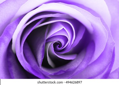 Macro of purple and white rose heart petals for greetings background