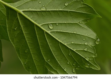 Macro of raindrops on a green leaf