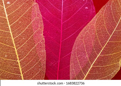 Macro red skeleton leaves background texture