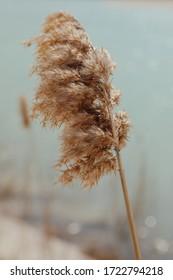 Macro Reeds on blue water