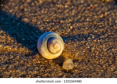macro in the sand - shell