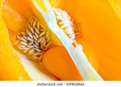 Macro of the seeds and internal view of a yellow bell pepper.