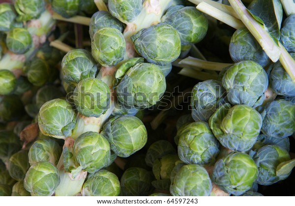 Macro of several green brussel sprout stalks at the farmers market