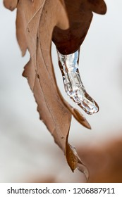 macro of a shiny curved icicle with airbubbles hanging on a brown leaf