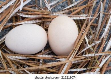 Macro shoot of brown eggs at hay nest in chicken farm