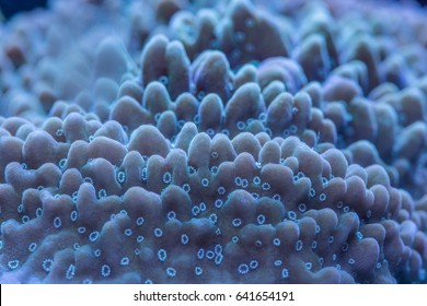 Macro shoot of coral montipora