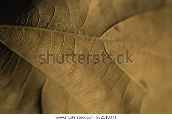 Macro shot of a autumn leaf. Stripes and paths.