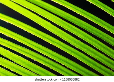 Macro shot of backlit green foliage texture