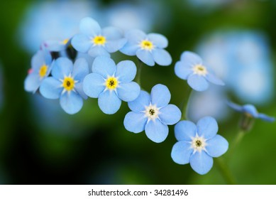 Macro shot of beautiful the little blue forget me not flowers.