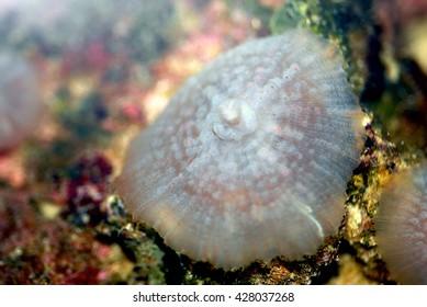 A macro shot of a beautiful specimen of mushroom coral