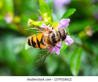 Macro shot of a bee eating pollen from a flower