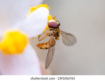 Macro shot of a bee on a flower eating pollen