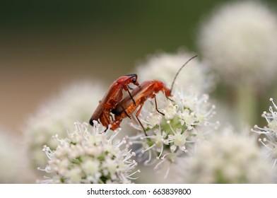 Macro shot of the beetles - vermination