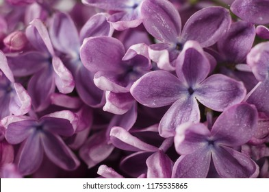 Purple flower background images stock photos vectors shutterstock macro shot of bright violet lilac flowers abstract romantic floral background mightylinksfo