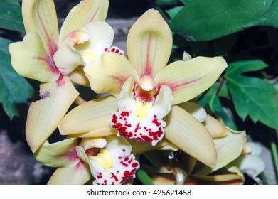 A macro shot of a bunch of beautiful orchids