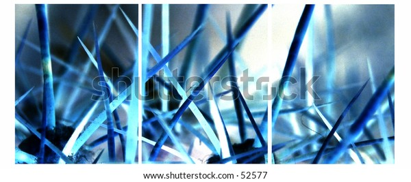 Macro shot of cactus spines coloured blue