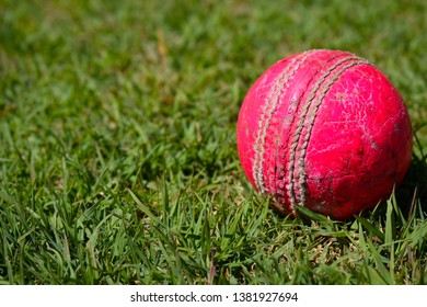 Macro shot of cricket isolated on a green grass with copy space. Pink cricket ball