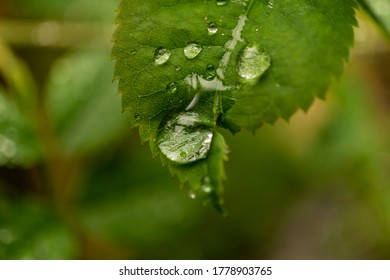 A Macro shot of dewdrops magnifying the detail of a leaf within a wild garden.