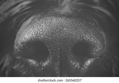 A macro shot from a dog's nose. Image in black and white.
