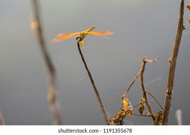 Macro shot, dragonfly in the nature habitat