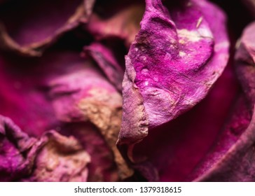 Macro shot of faded rose petals