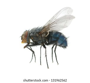 A macro shot of  fly