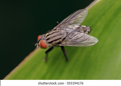 A macro shot of fly on a leaf green background . Insect close-up