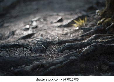 Macro shot of forest ground