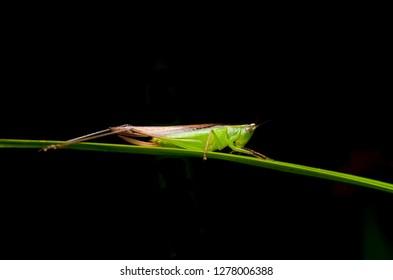 Macro shot of grasshopper in nature at night. Selective focus.