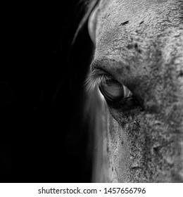 macro shot of a horse eye