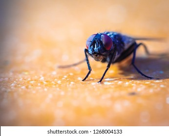 Macro shot of a housefly sitting on a yellow background